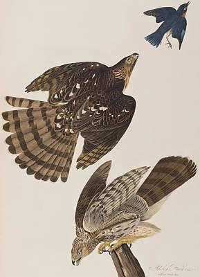 Stanley Hawk Poster