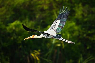 Stork In Flight Poster