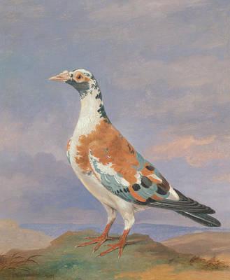 Studies Of Carrier Pigeon Poster by Dean Wolstenholme