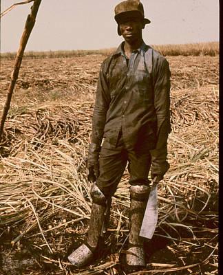 Sugar Cane Cutter Poster