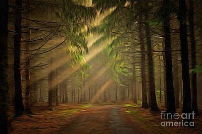 Sun Rays In The Forest Poster