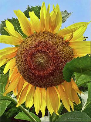 Sunflower Poster by Mikki Cucuzzo