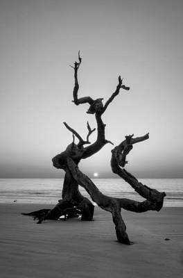 Sunrise On Driftwood In Black And White Poster