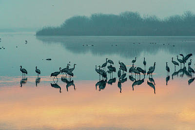 Sunrise Over The Hula Valley Poster