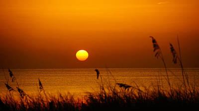 Sunrise Sea Oats Poster