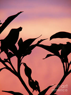Sunset Silhouette Poster by Rose  Hill