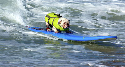 Surfing Dog Poster