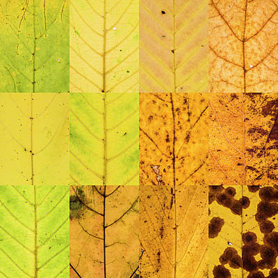 Swatches - Autumn Leaves Inspired By Gerhard Richter Poster