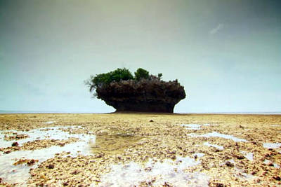 Tanzanian Island Zanzibar Coral Structures Landscape Photography Poster