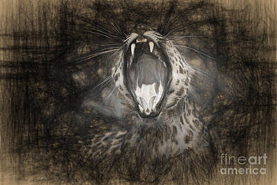 The Leopard's Tongue Rolling Roar IIi Poster by Mary Lou Chmura