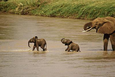 Tiny Elephants Poster