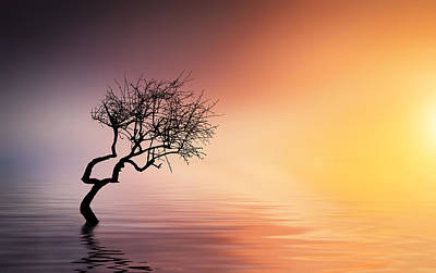 Tree At Lake Poster by Bess Hamiti