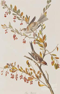 Tree Sparrow Poster by John James Audubon