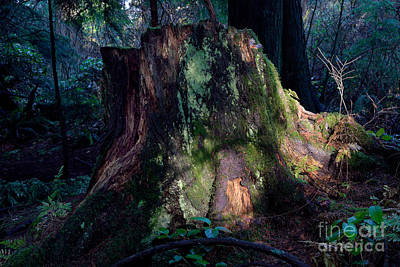 Tree Stump Poster by Terry Elniski