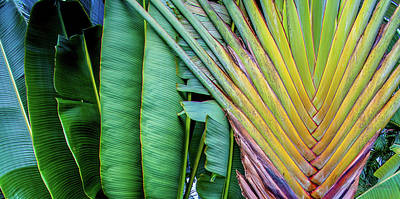 Tropical Palms Poster