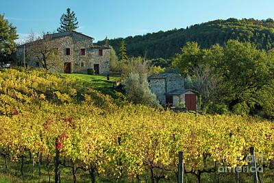 Tuscan Vineyard Poster