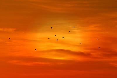 Upon A Sunset Flight Poster by Angie Tirado