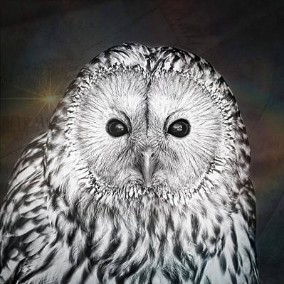 Ural Owl Poster by Tom Gowanlock