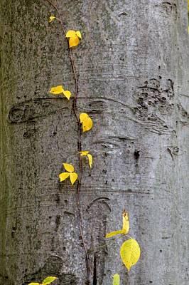 Vine Climber Poster by Deborah  Crew-Johnson