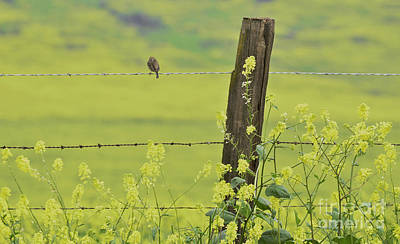 Warbler In The Meadow Poster