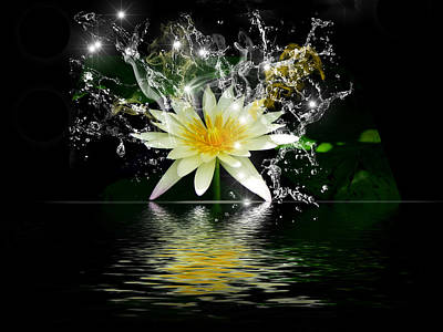 Water Lily Poster by Gordon Engebretson