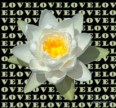 Water Lily Love Poster