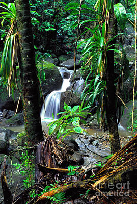 Waterfall El Yunque National Forest Poster by Thomas R Fletcher