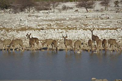 Poster featuring the digital art Waterhole Kudu by Ernie Echols