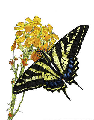 Western Tiger Swallowtail On A Western Wallflower Poster