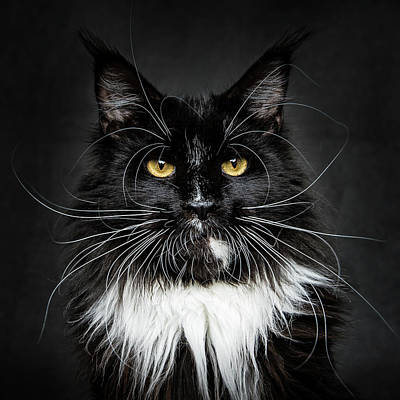 Poster featuring the photograph Whiskers  by Robert Sijka