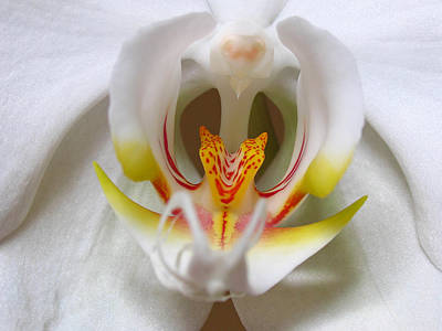 White Orchid Floral Poster by Juergen Roth