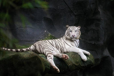 White Tiger Poster by Anek Suwannaphoom