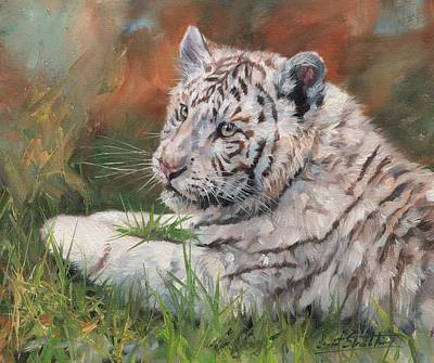 White Tiger Cub Poster by David Stribbling