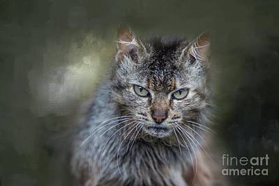 Wild Cat Portrait Poster