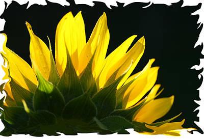 Poster featuring the photograph Wild Sunflower by Shari Jardina