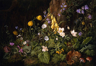 Wildflowers And Mushrooms In A Woodland Setting Poster by Franz Xavier