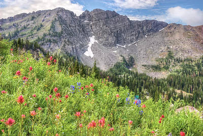 Wildflowers In Albion Basin Utah Poster