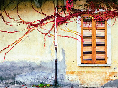 Poster featuring the photograph Window And Red Vine by Silvia Ganora
