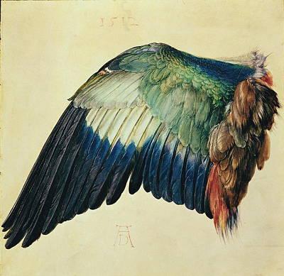 Wing Of A Blue Roller Poster by Albrecht Durer