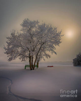 Winter Beauty Poster by Ian McGregor