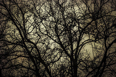 Winter Branches Poster by Garry Gay