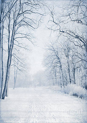 Winter Path Poster by Svetlana Sewell