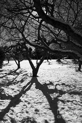 Poster featuring the photograph Winter Shadows by Yulia Kazansky