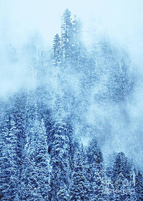 Winter Trees Poster by Svetlana Sewell