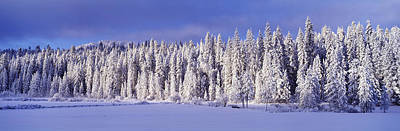 Winter Wawona Meadow Yosemite National Poster by Panoramic Images