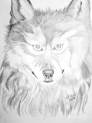Wolf Drawing 17-01 Poster by Maria Urso