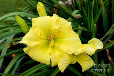 Yellow Gladiola Flower Poster