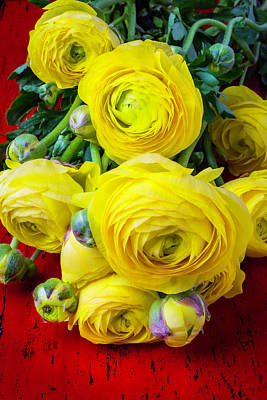 Yellow Ranunculus Poster by Garry Gay