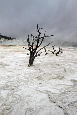 Yellowstone Mammoth Hot Springs Poster by Pierre Leclerc Photography