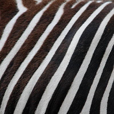 Zebra Wall Design 2 Poster by Heike Hultsch